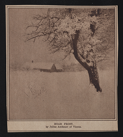Newspaper photo of snowy tree with caption