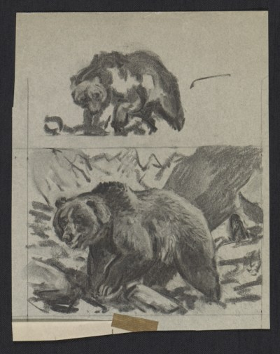 [Sketches of bears]
