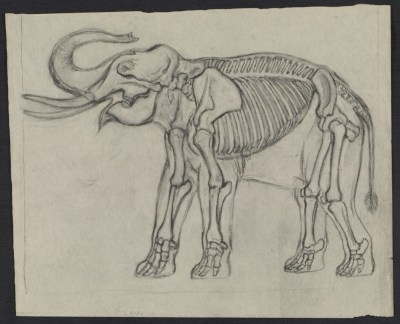 [Sketch of an elephant]