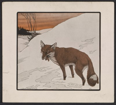 [Reproduction of a Paul Bransom drawing of a fox]