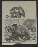 [Sketches of bears ]