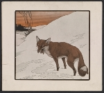 [Reproduction of a Paul Bransom drawing of a fox ]