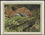 Reproduction of Red Fox by Paul Bransom