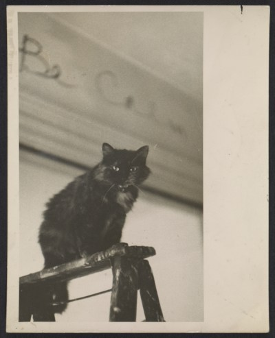Jay DeFeos cat, Pooh, in her studio