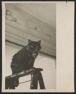 Jay DeFeo's cat, Pooh, in her studio