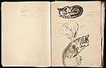 [Margaret Casey Gates sketchbook pages 10]