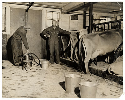 [Rockwell Kent in his dairy barn at Asgaar Farm]