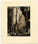 Rockwell Kent milking a cow