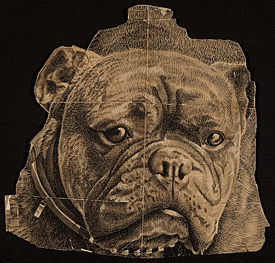 Benson Bond Moore drawing of a bulldog head