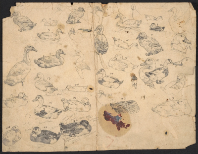 [Enumerated sketches of ducks]