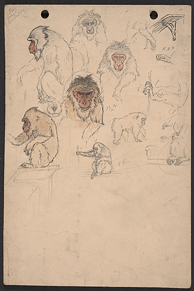 Grouped sketches of primates
