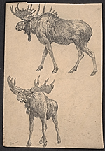 Sketch of two moose
