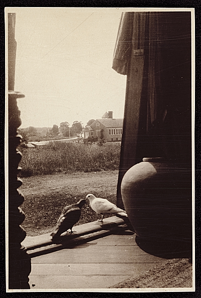 [Pigeons inside the doorway of the Old Hayground Windmill]