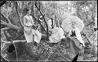 Three women in a tree