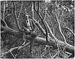 John F. Peto in a tree