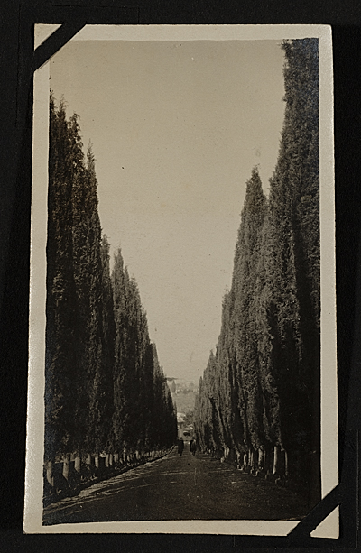 [The Villa Curonia: Approaching up the avenue of cypresses.]