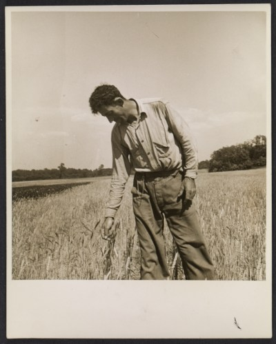 [Farmer at the Hightstown homestead project]