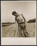 [Farmer at the Hightstown homestead project ]
