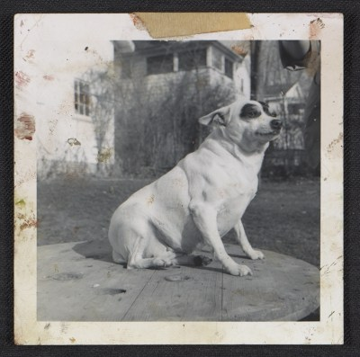 [Dog posing on table]