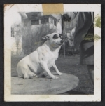 [Dog posing on table ]