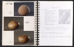 [Catalog for Masters, Chicago International New Art Forms Exposition pages 8]