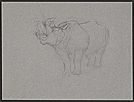 Study of a rhinoceros