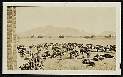 [Supply encampment outside Baghdad, Persia]