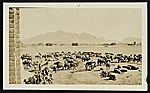 Supply encampment outside Baghdad, Persia