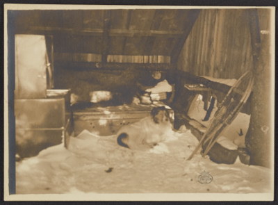 [Abbott Thayer in his sleeping hut with his dog Hauskuld]