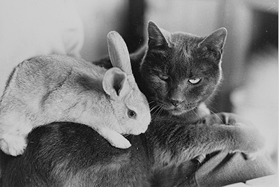 Photograph of cat with bunny