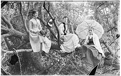 Photograph of three women in a tree
