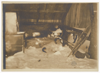 The sleeping hut of Abbott Thayer and his dog Hauskuld