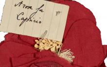 Portion of a costume sent to Joseph Cornell by Tamara Toumanova